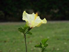 #flower #macro #green #outside
