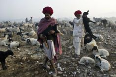 Prakash Singh—AFP/Getty Images Dec. 9, 2013. Nomadic shepherds from Rajasthan herd their sheep at a camp on the outskirts of New Delhi.
