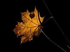 Leaf Leaf by Leif Sohlman