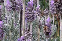 Olfactory delights in San Francisco's Botanical Gardens.