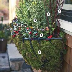 Take a look at our list of cold-weather plantings for winter window boxes (Photo: Keller & Keller)