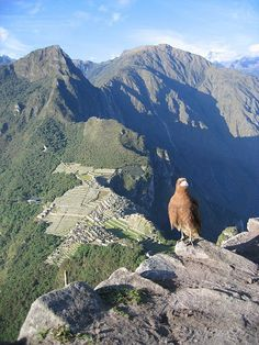 Looking at Machu Picchu from above, Peru (by THuangPhotography).