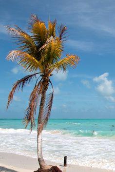 Yucatan (Mexiko): Geheimtipps einer Einheimischen. Ingrid wohnt seit zwölf Jahren in Mexiko. Sie gibt euch im Artikel Tipps für Yucatan – mit Cancun, Playa del Carmen, Tulum, Kolonialstädten, vielen Mayastätten und der Isla Holbox.