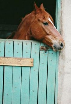 ...with a neigh here & a neigh, neigh there!