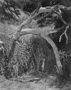 Wynn Bullock, Child and the Unknown. Photo PB