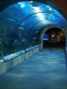 New Orleans Louisiana The Audubon Aquarium of the Americas