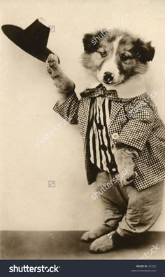 Dancing Dog Act - a humorous turn-of-the-century, vintage photograph.