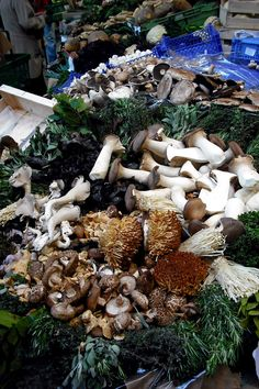Mushrooms at the Borough Market, London