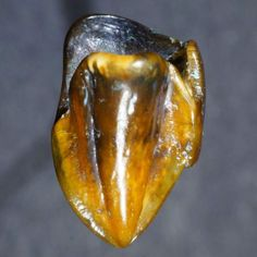 9.7-Million-year-old Teeth Discovery in Germany