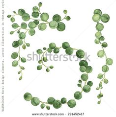 Watercolor collection of succulents String of Pearls, decorative hand-drawn illustration for your design.