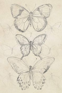 art sketchbook Vintage Butterfly Sketch I Canvas Artwork by June Erica Vess Art Sketches Art art sketches artwork Butterfly Canvas Erica June sketch sketchbook Vess Vintage Cool Art Drawings, Pencil Art Drawings, Art Drawings Sketches, Tattoo Drawings, Tattoos, Cool Sketches, Tattoo Sketches, Pretty Drawings, Sketch Drawing