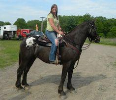 About sugarbush horse on pinterest draft horses sugar and horses
