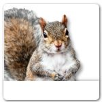 Squirrel Ecards: Birthday, Thank You, Holidays, More