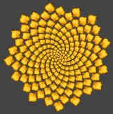 golden ratio in nature - Google Search