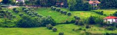 Ancona, Marche, Italy - Trees in the countryside- miniature1 - by Gianni Del Bufalo  CC BY-NC-SA by gianni del bufalo