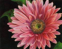 The Artwork of Cathie Fithian Pink Gerber Daisy