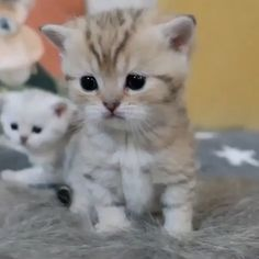 cute baby animals, cute funny animals, cute dogs, animals and pets Cute Baby Cats, Kittens And Puppies, Cute Little Animals, Cute Cats And Kittens, Cute Funny Animals, Kittens Cutest, Funny Cats, Cute Dogs, Pet Cats