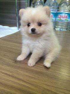 I love my girlfriends puppy. Look at its little face. http://ift.tt/2p4ofBR