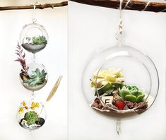Hanging Garden. Mini glass globe terrariums with succulents.