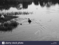 Download this stock image: lake - H5JKW2 from Alamy's library of millions of high resolution stock photos, illustrations and vectors.