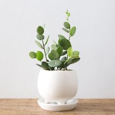 32 Beautiful Indoor House Plants That Are Also Easy To Maintain This big list of low-maintenance houseplants will help you bring nature indoors easily. Ferns, succulents, trees, and more - something for every style. Bonsai Plants, Potted Plants, Indoor Plants, Indoor Gardening, Organic Gardening, Plant Pots, Indoor Succulents, Indoor Herbs, Succulent Planters