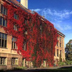 visitosloYou find the Museum of Natural History inside Oslo's Botanical Garden at Tøyen. Photo: @rihelena #Oslo #visitoslo