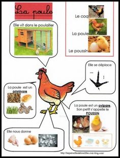 poule plus lots of other animals at the site Kindergarten Activities, Science Activities, Activities For Kids, Preschool, Science For Kids, Science And Nature, Early Learning, Kids Learning, Fun Facts About Animals