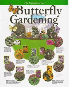 Attract butterflies to your garden