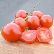 Tomatoes - Organic - Glacier Tomato Conventional & Organic