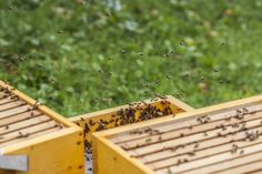 bee My Photos, Bee, Honey Bees, Bees