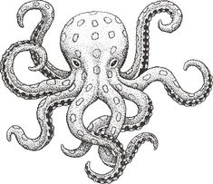 Drawing Ink Free art print of Octopus Engraving Illustration. Blue-Ringed Octopus - Classic Drawn Ink Illustration Isolated on White Background Octopus Sketch, Octopus Art, Easy Octopus Drawing, Octopus Outline, Octopus Colors, Gravure Illustration, Whale Illustration, Animal Body Parts, Octopus