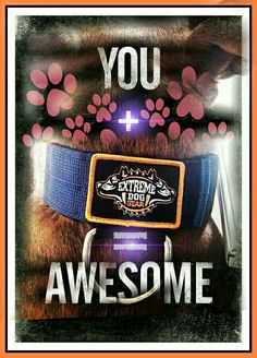You + Extreme Dog Gear Collars = Awesome
