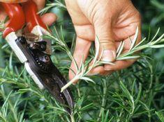 Regional Calendar of Herb Garden Care Lawn And Garden, Herb Garden, Vegetable Garden, Garden Plants, Growing Lavender, Growing Herbs, Container Gardening, Gardening Tips, Espalier