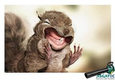 Anthropomorphized Animal Ads -- To advertise the power of the electric leaf blower by ASGATEC