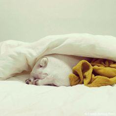 頭隠して尻隠さず♥️ #frenchbulldog #frenchie #dog #daughter #babygirl #フレンチブルドッグ #女の子