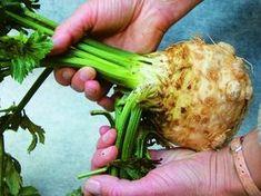 Na místech, kde se mravenci shlukují, jim připravte netradiční zeleninovou pochoutku. Na kostky nebo plátky nakrájejte celer, osolte ho a posypte mletou skořicí. Uvidíte, že se do pár dní odstěhují. Sůl totiž ze zeleniny vytáhne celerovou vodu, která je samotná hodně aromatická, a skořice tomu dodá ještě větší sílu. Edible Garden, Celery, Asparagus, Herbalism, Flora, Remedies, Food And Drink, Home And Garden, Gardening