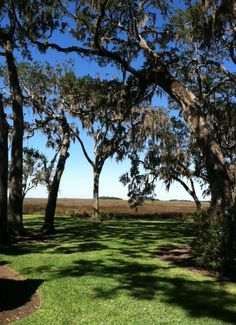 love the Lowcountry marshes