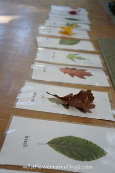 Leaf Identification Cards <a href=http://wildflowerramblings.com/homeschooling/leaf-identification-cards-free-printable/>Not supported by mobile. Click to view original post</a> from Wildflower Ramblings