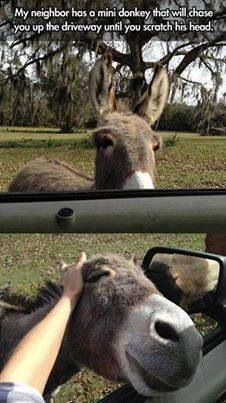 Funny pictures about Mini Chasing Donkey. Oh, and cool pics about Mini Chasing Donkey. Also, Mini Chasing Donkey photos. Cute Funny Animals, Funny Cute, The Funny, Hilarious, Mini Burro, Animals And Pets, Baby Animals, Wild Animals, Animal Pictures