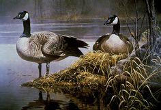Canada Geese Nesting Artwork by Robert Bateman Cow Painting, China Painting, Painting & Drawing, Art Canard, Canadian Wildlife, Eagle Art, Bird Drawings, Watercolour Tutorials, Funny Art