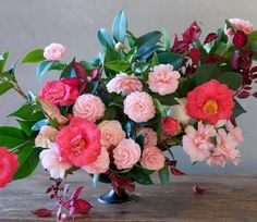 Wherever there's camellia, there's beauty! #tulipina ~ ¸.✿ ¸.✿
