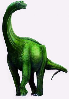 """Aragosaurus (meaning """"Aragon lizard"""") was a genus of sauropod dinosaur from the Early Cretaceous period of Galve, province of Teruel, in the autonomous territory of Aragón, Spain. Aragosaurus was a large, quadrupedal plant-eating (herbivorous) dinosaur, which lived about 130-120 million years ago, in the Hauterivian-Barremian. It was about 60 ft (18 m) in length and about 28000 kg in weight."""