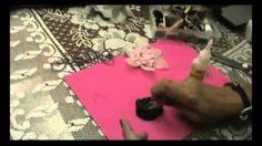 Eliane Moreira - YouTube