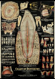 Chart of Dentistry by Artist Unknown   Shop original vintage posters online: www.internationalposter.com
