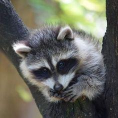 Ferret, Owl, Tags, Animals, Beautiful, Instagram, Rabbits, Dog, Cute Animals