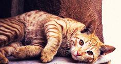 """""""Come ogni gatto, Alfie adora passare le sue giornate sonnecchiando sul divano davanti al camino. Un po' di carezze, un po' di fusa rumorose, ed è felice."""""""
