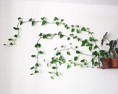 painting hooks and double-sided tape (so as not to damage the wall), she guides stems from her potted Golden Pothos—which sits on a floating shelf—through the hooks and across the wall.