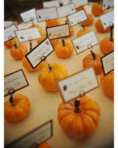 fall wedding place card holders. where to buy fall wedding place card holder. october mini pumpkin on the table, holders ideas