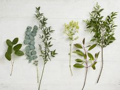Foliage provides texture, extra colour, shape and proportion to an arrangement. Learn how to pick the right kind of foliage to give your design the necessary height, width, depth and interest it needs to look balanced and substantial.