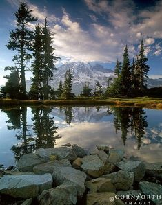 Mt. Rainier National Park, Washington; photo by Jon Cornforth by maria.t.rogers